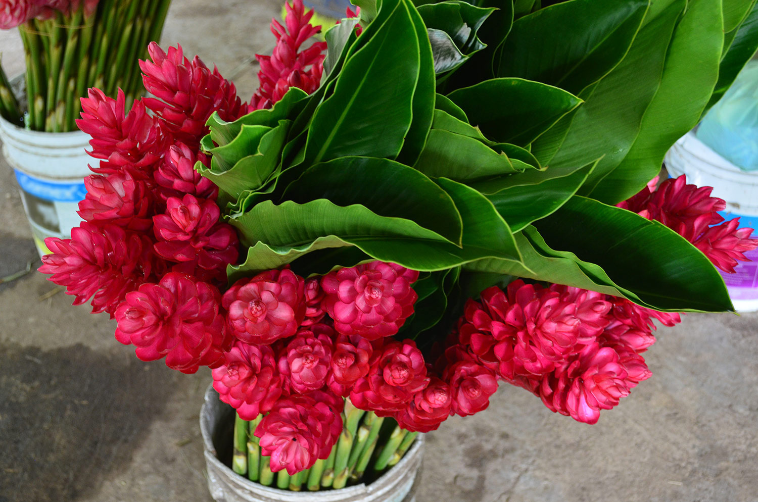 A bouquet of ginger flowers. Tropical flowers, Mexico.