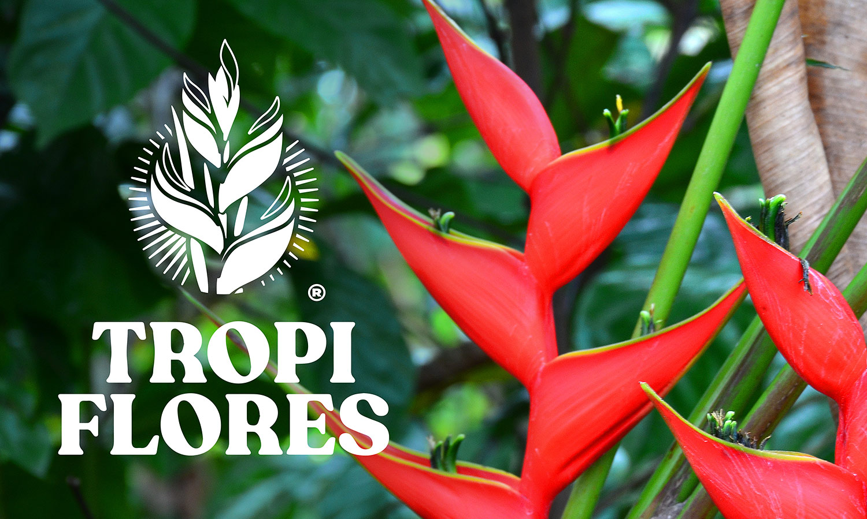 A Heliconia flower. A flower farm logo Tropi Flores, Tapachula, Chiapas state, Mexico.